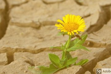 Flower showing mental resilience
